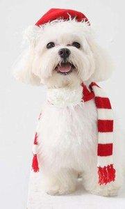 昨天圣诞夜你和谁过的?一首single dog送给你们,快来抱团取暖~