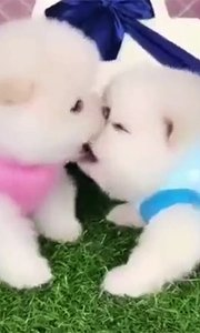 神技能!它们竟然当众舌吻