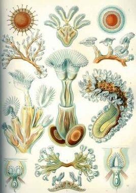 海生苔藓虫的生境多种多样