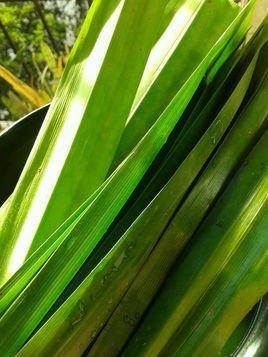 斑斓叶图片