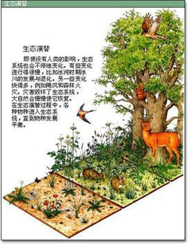 生态系统演替_360百科图片