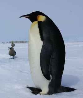 动物 企鹅 268_319