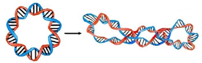 dna矢量图 染色体