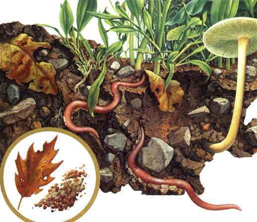 蚯蚓是寡毛纲中陆生环节动物中的任何一种尤其指蚯蚓科中分布甚广的