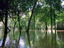 亚马孙热带雨林_亚马逊热带雨林_360百科
