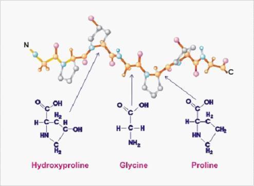 kolla2的分子结构