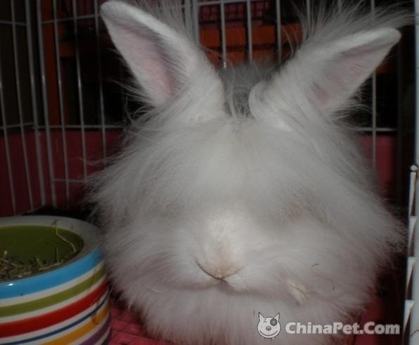 壁纸 动物 兔子 595_490
