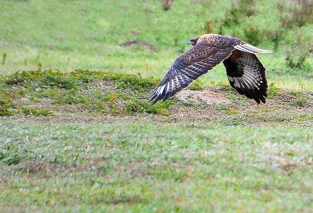 列入中国国家重点保护野生动物二类保护动物名录