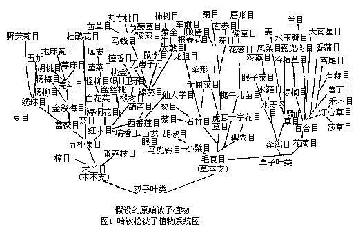 哈钦松被子植物分类系统