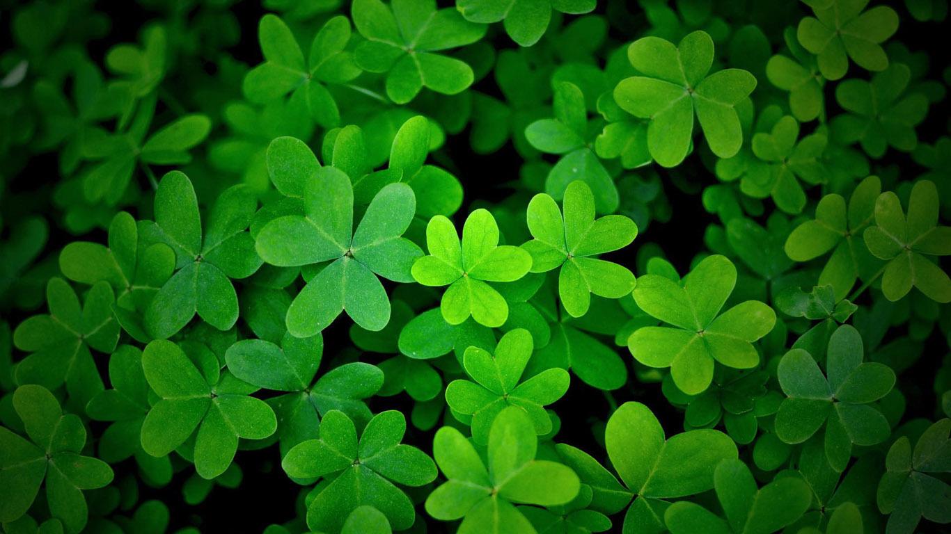 壁纸 花 绿色 绿叶