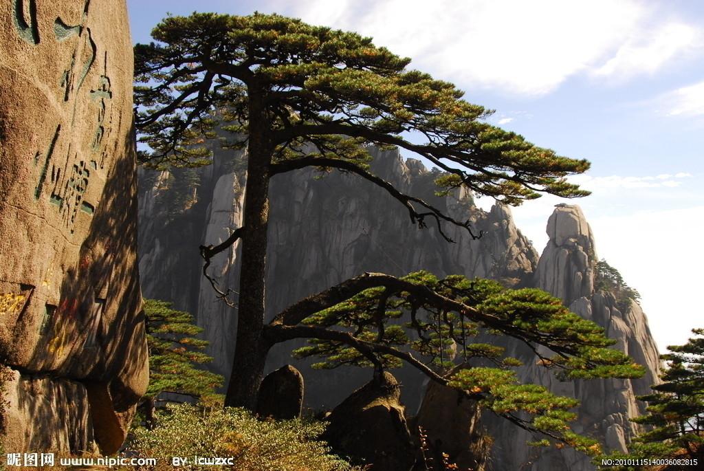 安徽名贵树木图片大全