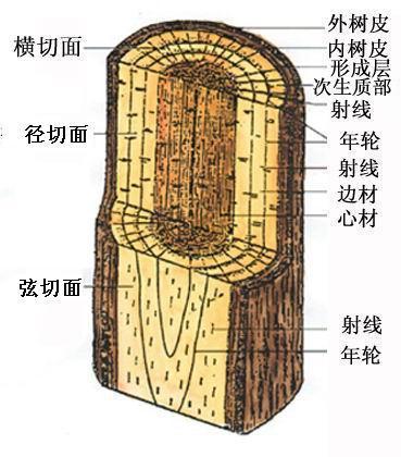 根据弦切面的不同纹路可以作为鉴别木材的依据之一
