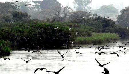 香港米埔野生动物保护区
