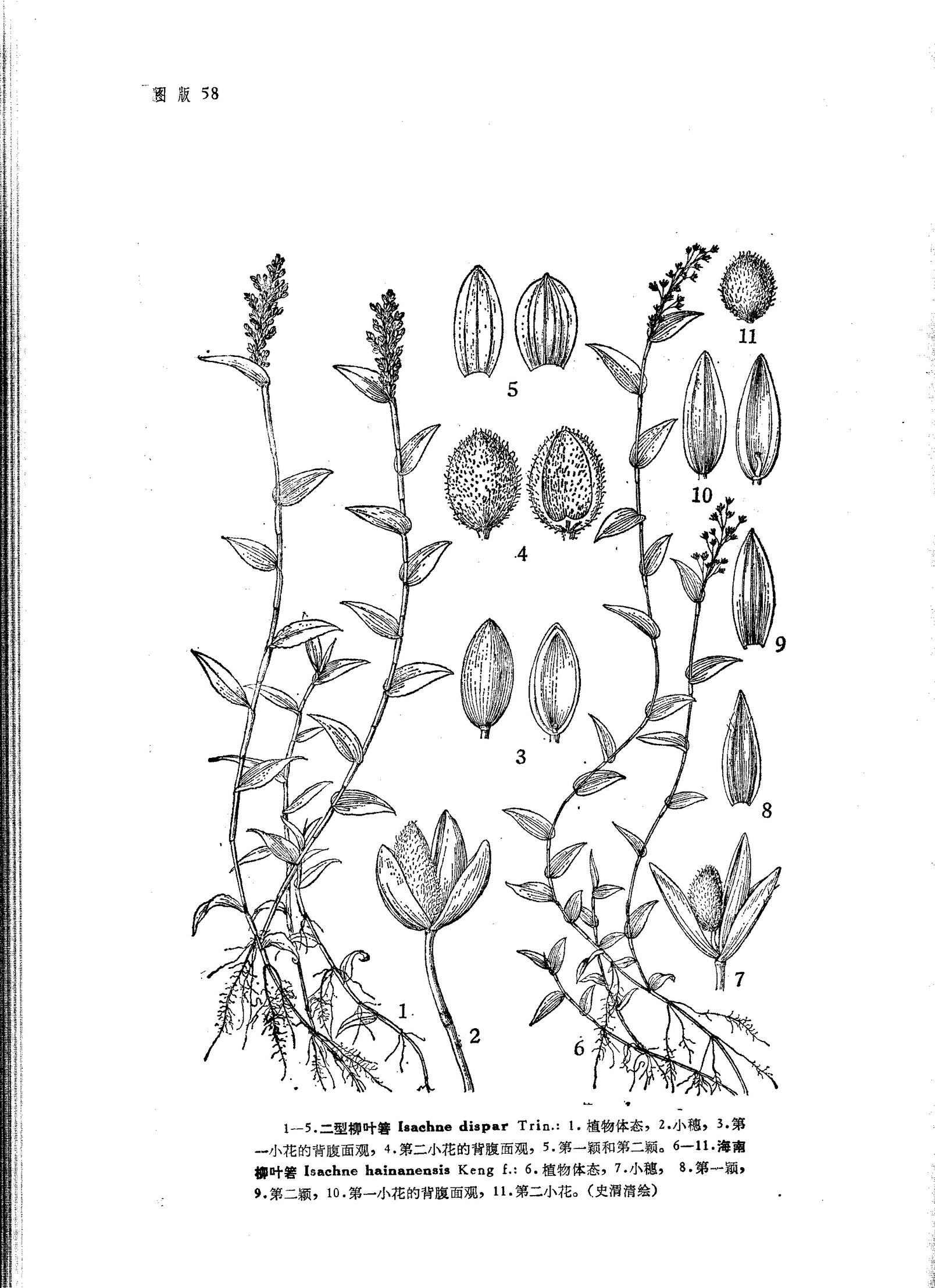 简笔画 手绘 线稿 1608